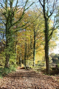 Autumn tints at Linacre