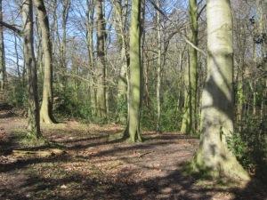 Moss Valley woodland
