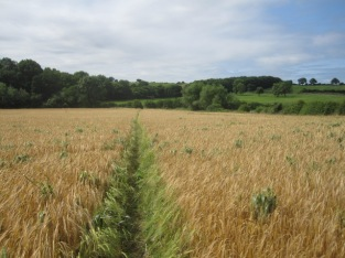 A nearby field shows the way through crops