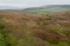 Summer grasses on Abney Moor