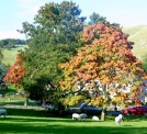 That tree in Ilam Park