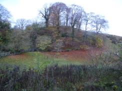 Beech tree, Coombs Dale