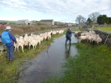 John the shepherd, Wardlow Mires