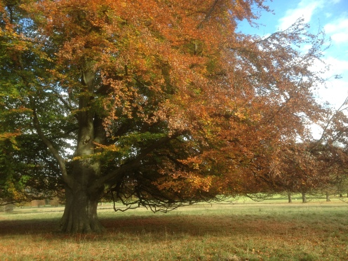 Autumn in Chatsworth Park