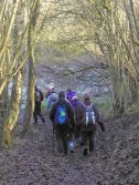 Langwith Wood