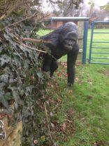 A follower in West Handley ?