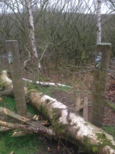 Storm Doris had left her mark in Upper Padley
