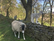 Lamb on wall