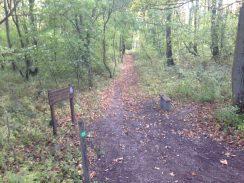 Blacka Moor Woods