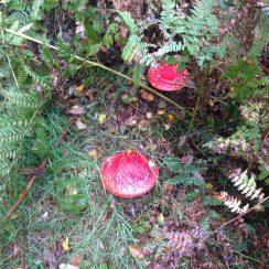 Blacka Moor fungi