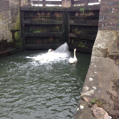 Shipley Lock