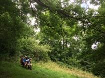 Edge of Taddington Wood before ascent of Taddington Field